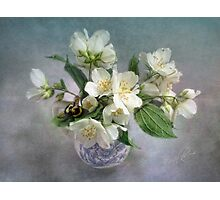 Mock Orange Blossoms Bouquet with Bumble Bee Photographic Print