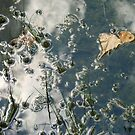 Pond's Edge Reflection Abstract  by clizzio