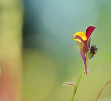 Colourful Beauty  [ BEE ORCHID ] by relayer51