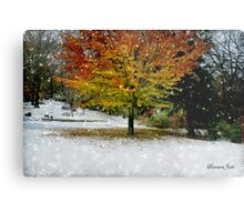 Beech Tree~ Caught in a Snow Flurry Metal Print