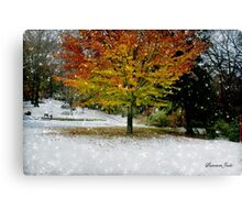Beech Tree~ Caught in a Snow Flurry Canvas Print