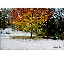 Beech Tree~ Caught in a Snow Flurry Photographic Print
