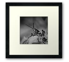 Lubber, Florida Everglades Framed Print