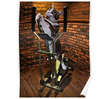 """MOM BRING ME SOME WATER THIS WORKOUT IS KILLING ME"" CAT-FELINE EXERCISE PICTURE/CARD Poster"