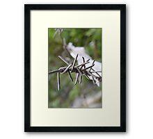 Barbed. Framed Print