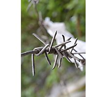 Barbed. Photographic Print