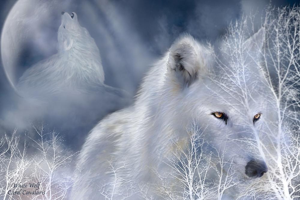 White Wolf by Carol  Cavalaris