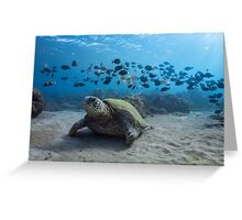 Turtle and Band of Fish Greeting Card