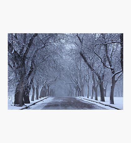 Tree Lines Photographic Print