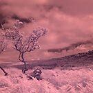 Dartmoor by Neil Bygrave (NATURELENS)