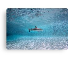 Shark Among Prey Canvas Print