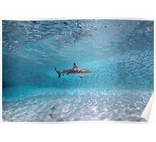 Shark Among Prey Poster