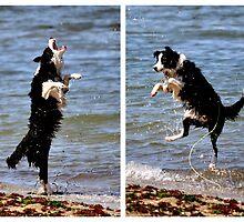 The All Singing, All Dancing Wonder Dog! by Tiffany Dryburgh