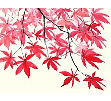 red maple leaves watercolor painting Photographic Print