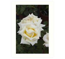 roses in the garden Art Print