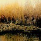 Backyard Pond by Diane Arndt
