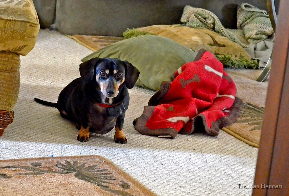 I'm Guilty ( I put all these Pillows and Blankets on the floor) by TJ Baccari Photography
