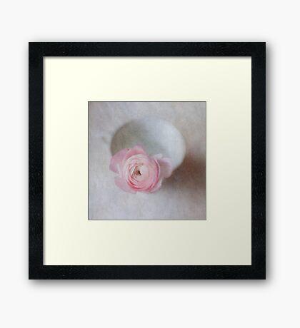 Pale Pink Textured Ranunculus Framed Print