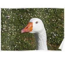 Goose on the meadow Poster