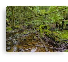 Tasmanian Forest Canvas Print