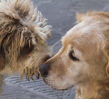 cute dog by spetenfia