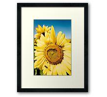Bumble Bee & Sunflower Framed Print
