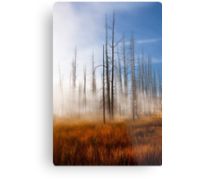 Tree Skeletons, Yellowstone National Park, USA. Metal Print