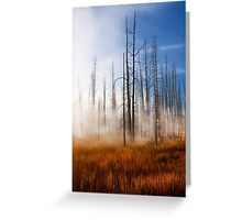 Tree Skeletons, Yellowstone National Park, USA. Greeting Card