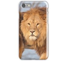 Lion brothers iPhone Case/Skin