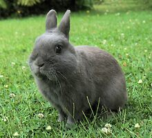 Billy the Rabbit by Michael John