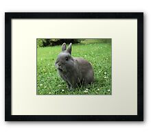 Billy the Rabbit Framed Print