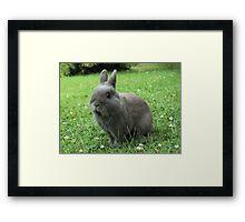 Billy the Rabbit Framed Print