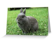 Billy the Rabbit Greeting Card
