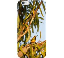 Yellow Honey Eater iPhone Case/Skin