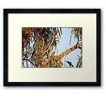 Yellow Honey Eater Framed Print