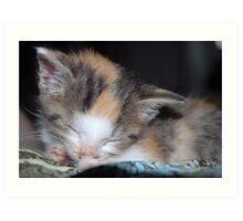 Sleeping Kitten Art Print
