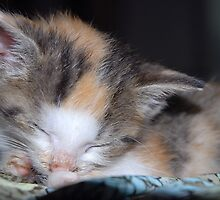Sleeping Kitten by vbk70