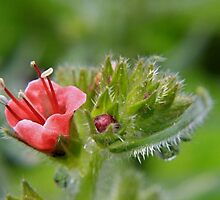 A bud blossoms by missmoneypenny
