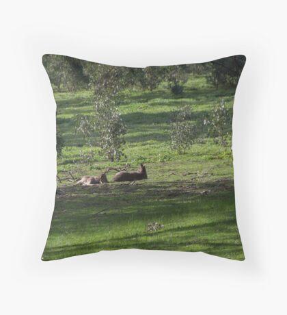 Kangaroos Eltham Victoria Australia 20160802 7263  Throw Pillow