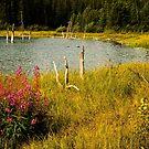 Edge of the lake by Yukondick