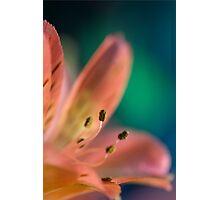 Flower Arrangement Photographic Print