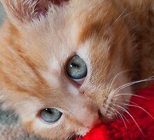 Kitten's Eyes by JonKing