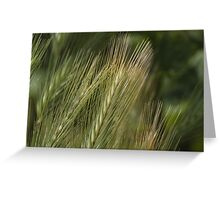 ear in the meadow Greeting Card