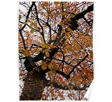 Looking Up Leaves & Trees Poster