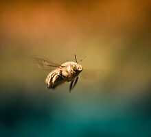 Little Bee Wanderer by lightwanderer