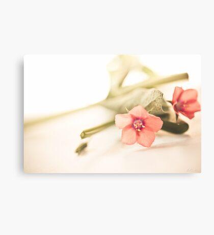 Origanum Flower Canvas Print
