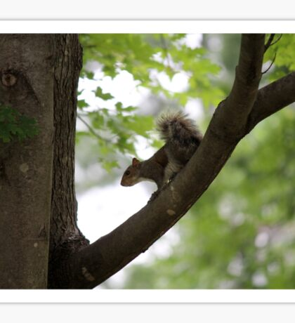 squirrel on the tree Sticker