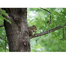 squirrel on the tree Photographic Print
