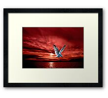 Silver Gull in Orange Red Ocean Sunrise. Framed Print