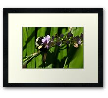 Bumble at Work Framed Print